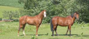 horses in charles county md